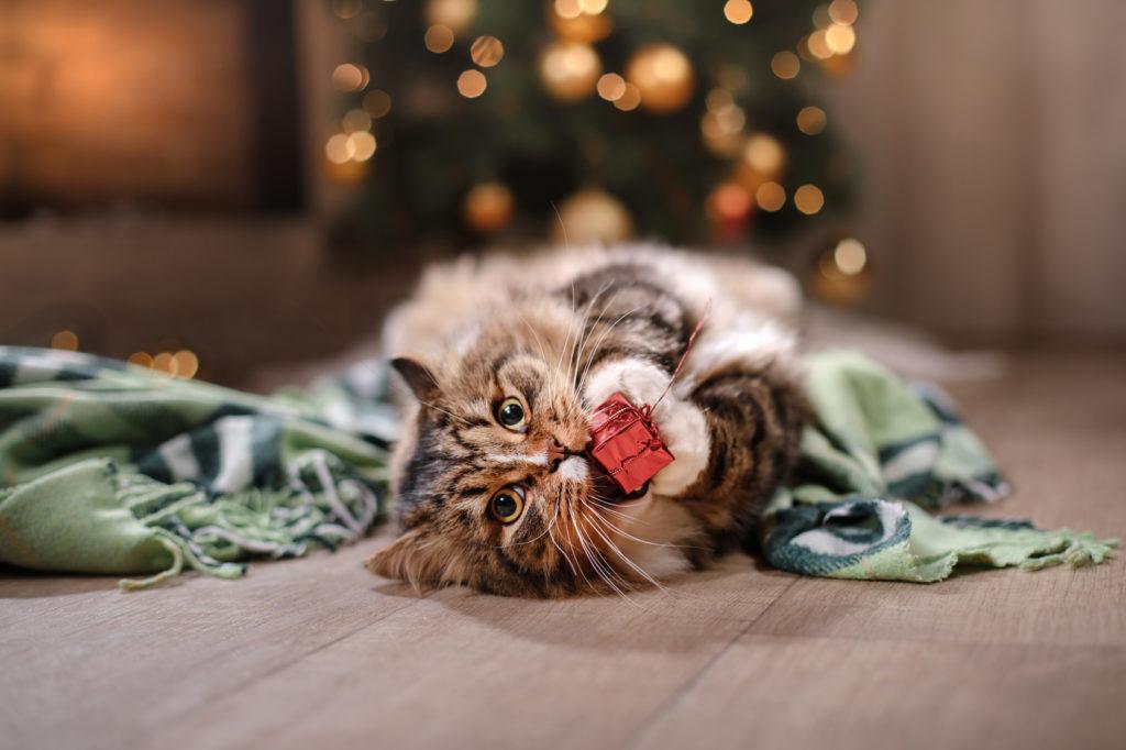Chat à Noël