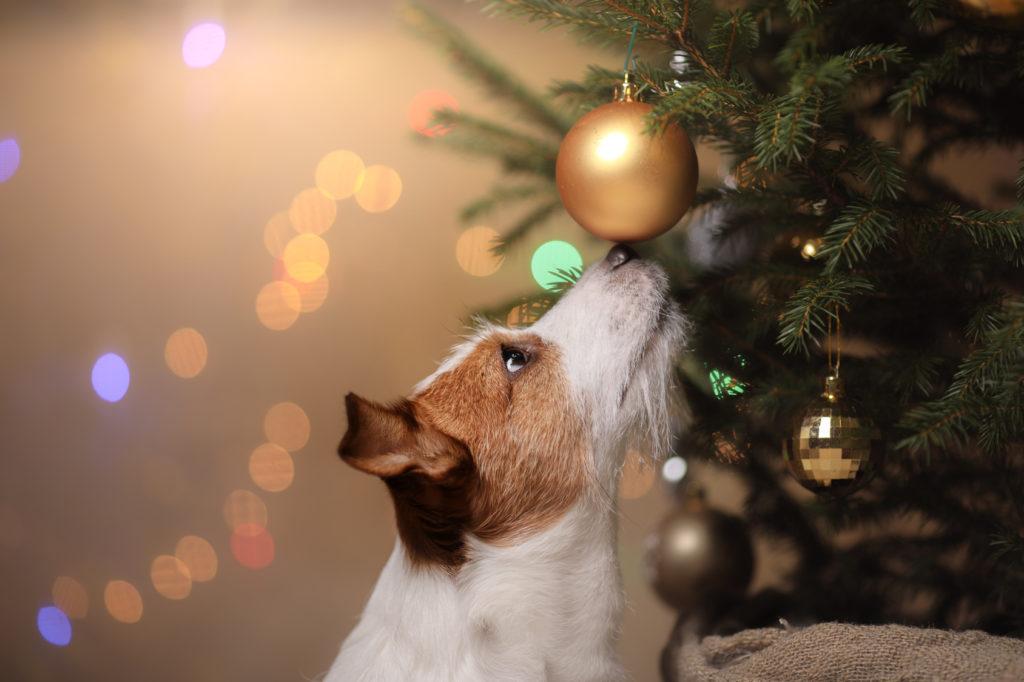 Chien sapin de Noël