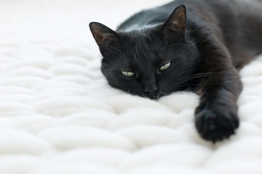 problèmes respiratoires chez le chat