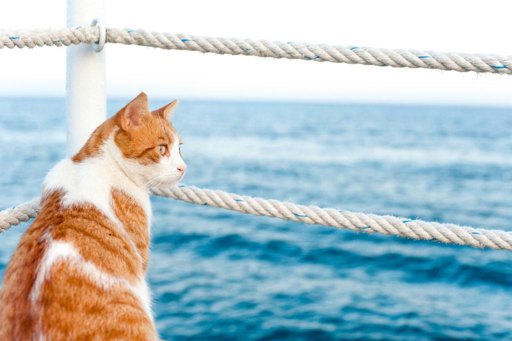 Voyager avec son chat en bateau