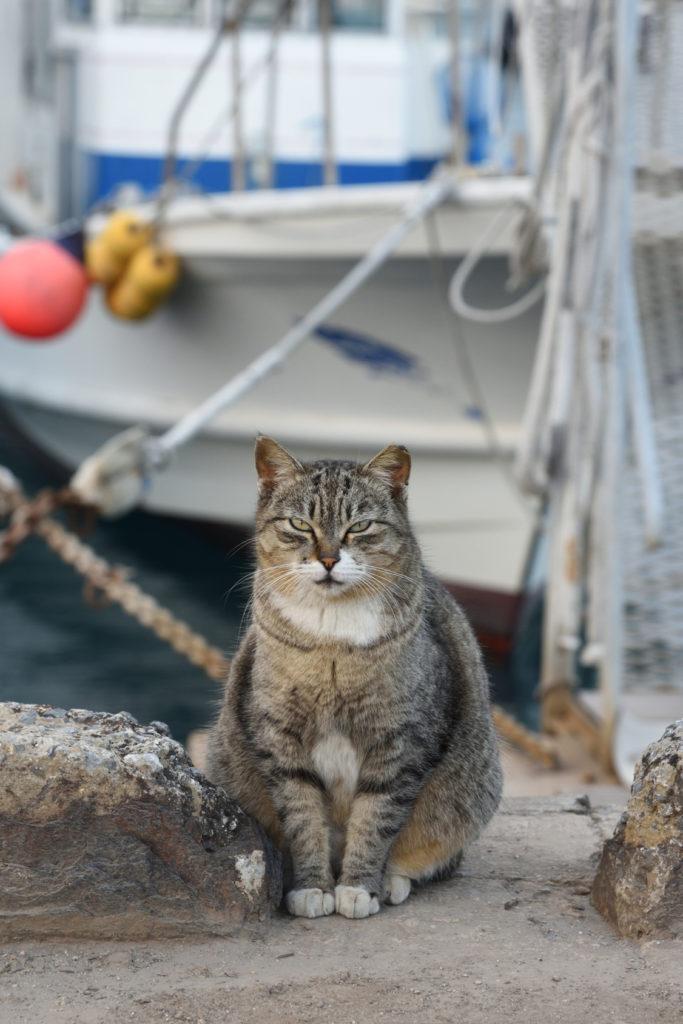 Voyager en bateau avec son chat
