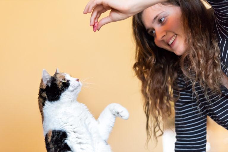 Chat qui fait le beau et attend sa friandise