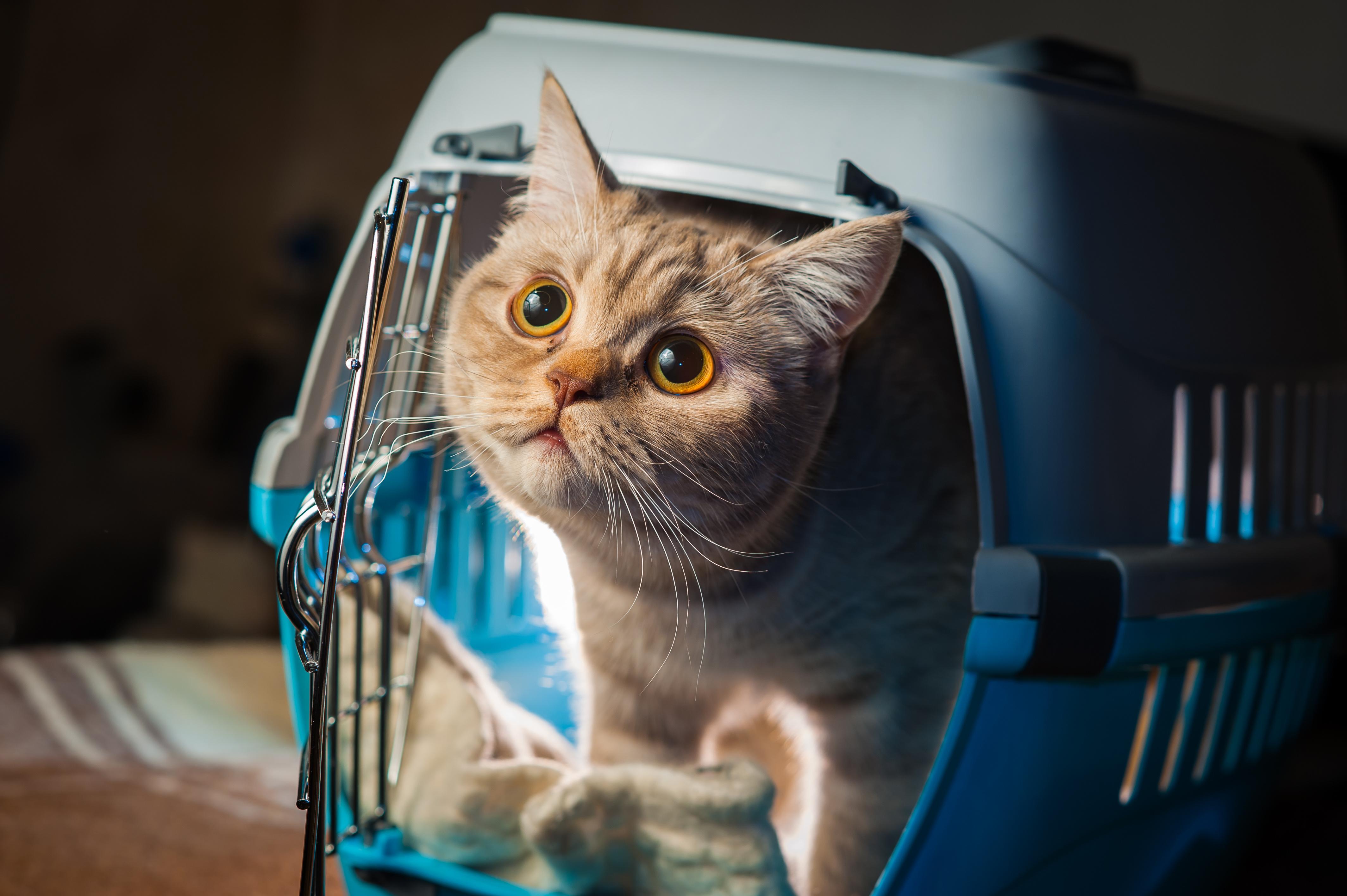 chat étranger datant qu'est-ce que cela signifie d'avoir un rêve de sortir avec une célébrité