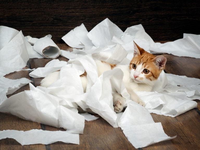 Chat qui joue avec du papier toilette