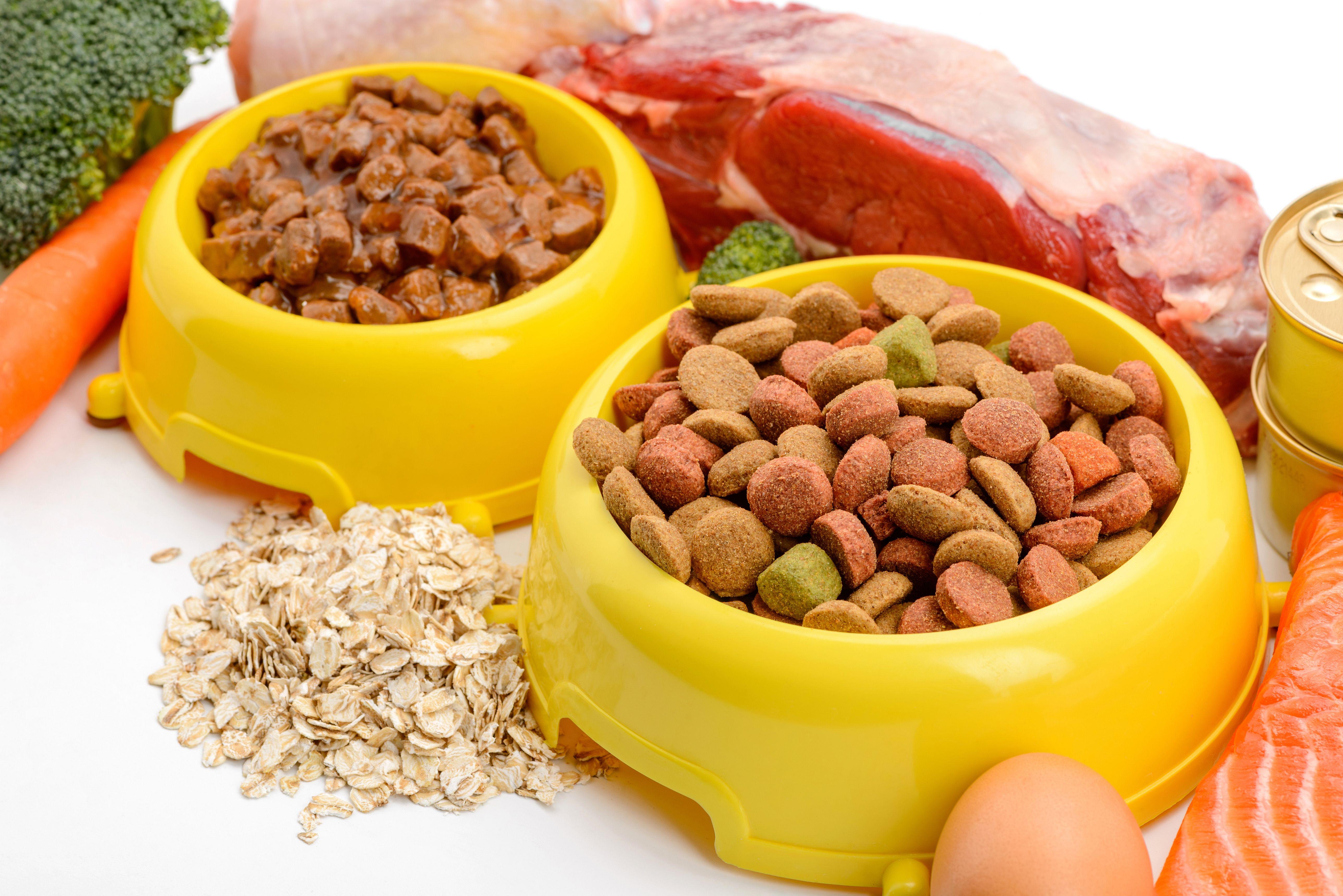 Nourriture Pour Chien Boites Vs Croquettes Magazine Zooplus