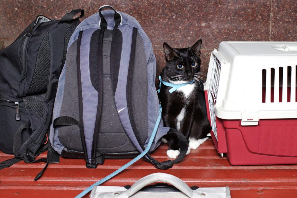 Chat noir assis sur un banc en bois entre sa caisse de transport et un sac à dos