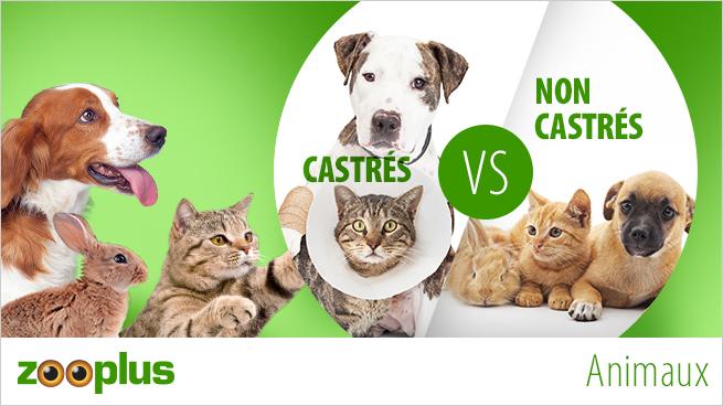 """Chiens, chats et lapins sur un fond vert et dans un cercle blanc dans lequel est marqué """"castrés VS non castrés"""""""