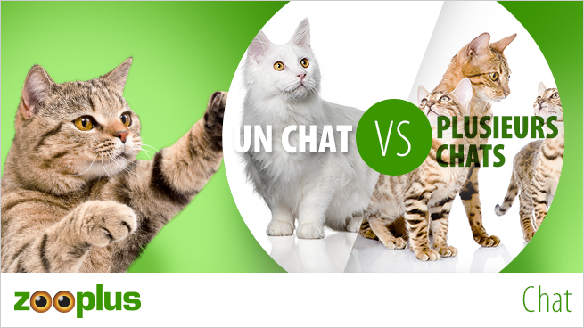 Adopter un chat VS adopter plusieurs chats