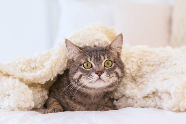 chat qui a peur des feux d'artifices