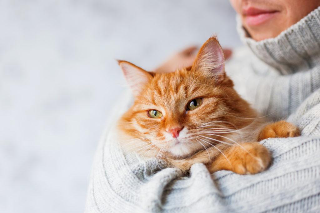 Chat roux tenu dans les bras de son maître, qui porte un pull en laine gris