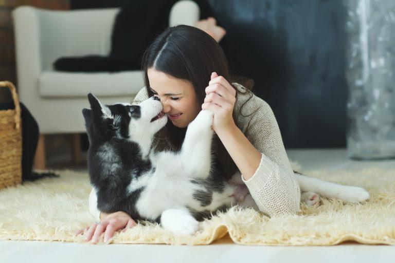 chien noir et blanc qui joue et aime sa maîtresse sur le tapis
