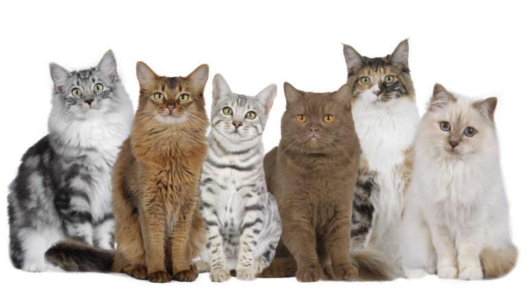 Groupe de chats de différentes couleurs sur fond bland