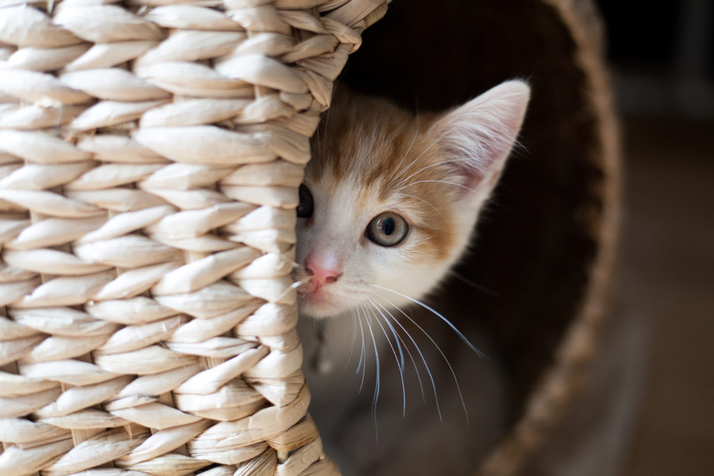 chat caché dans une corbeille en osier renversée