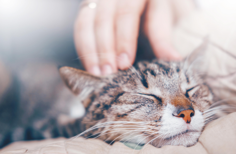 rencontres Help chat salles Vitesse datant comté de Suffolk NY