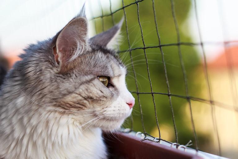 Chat assis sur un balcon derrière un filet