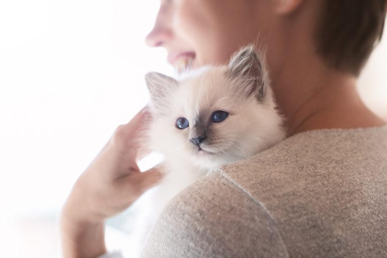 Portait de face d'un chaton blanc, tenu dans les bras de sa maîtresse qui est vue de dos