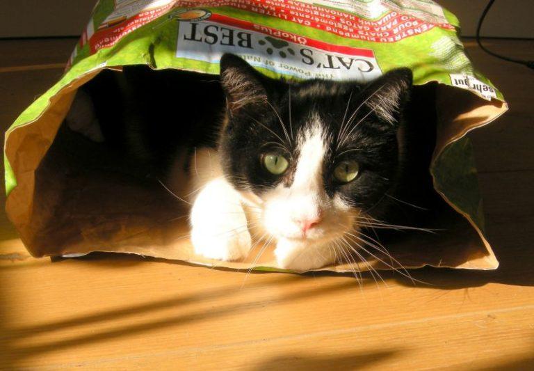 Chat caché dans un sac de litière