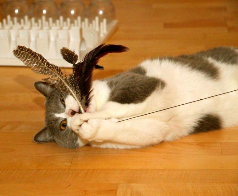 Chaton allongé sur le sol qui joue avec une canne à pêche pour chat en plume