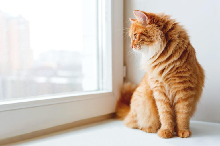Le marquage urinaire chez le chat