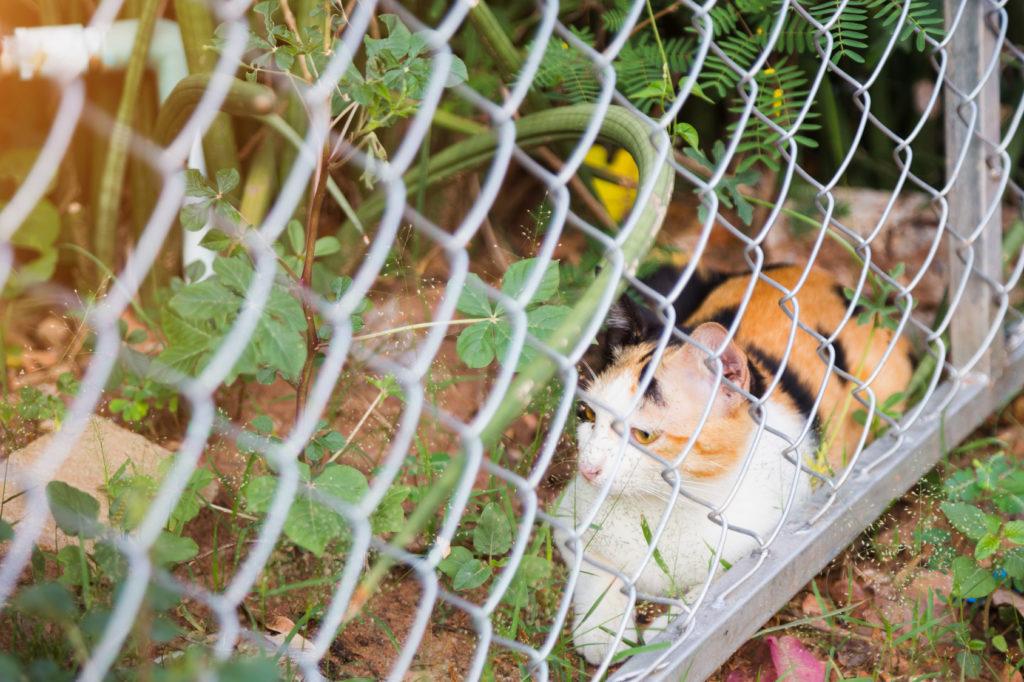 Chat roux, noir et blanc allongé dans son jardin derrière la clôture