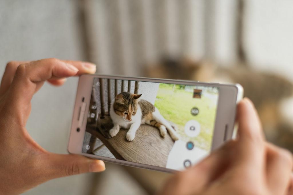 les mains d'une femme en train de prendre son chat en photo avec son portable