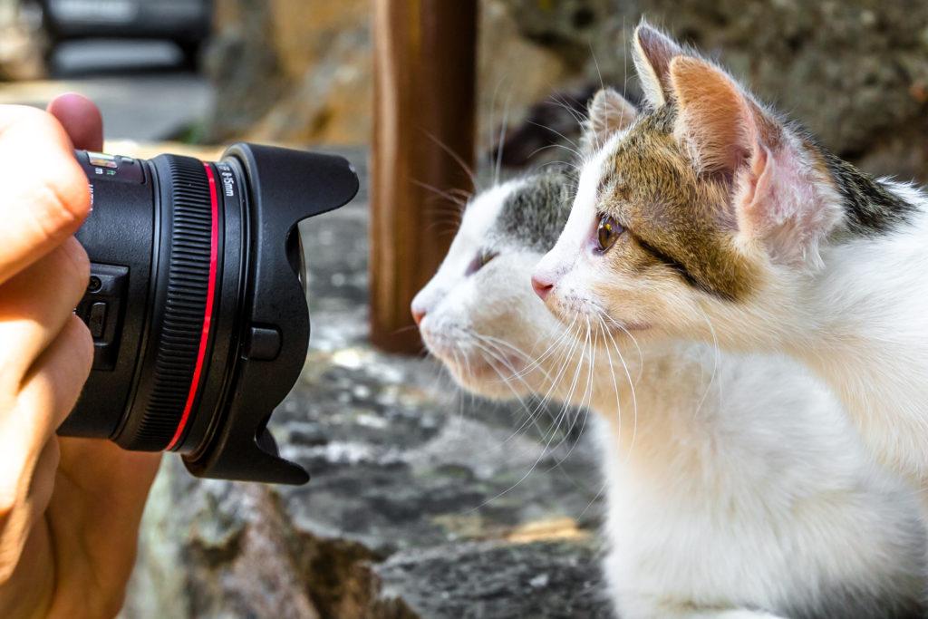Deux chats, le visage près d'un objectif, en train d'être photographiés