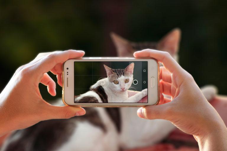 Mains d'une personne en train de tenir un téléphone portable et de photographier son chat avec