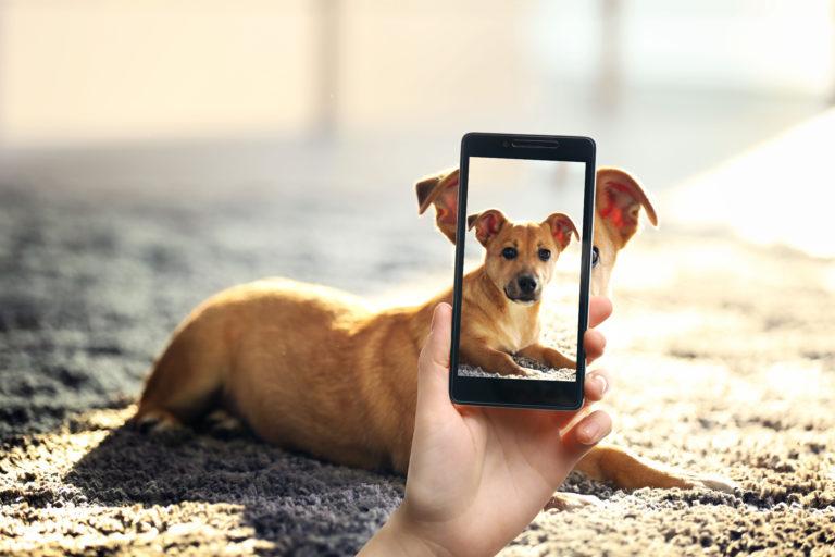 photo de chien avec smartphone