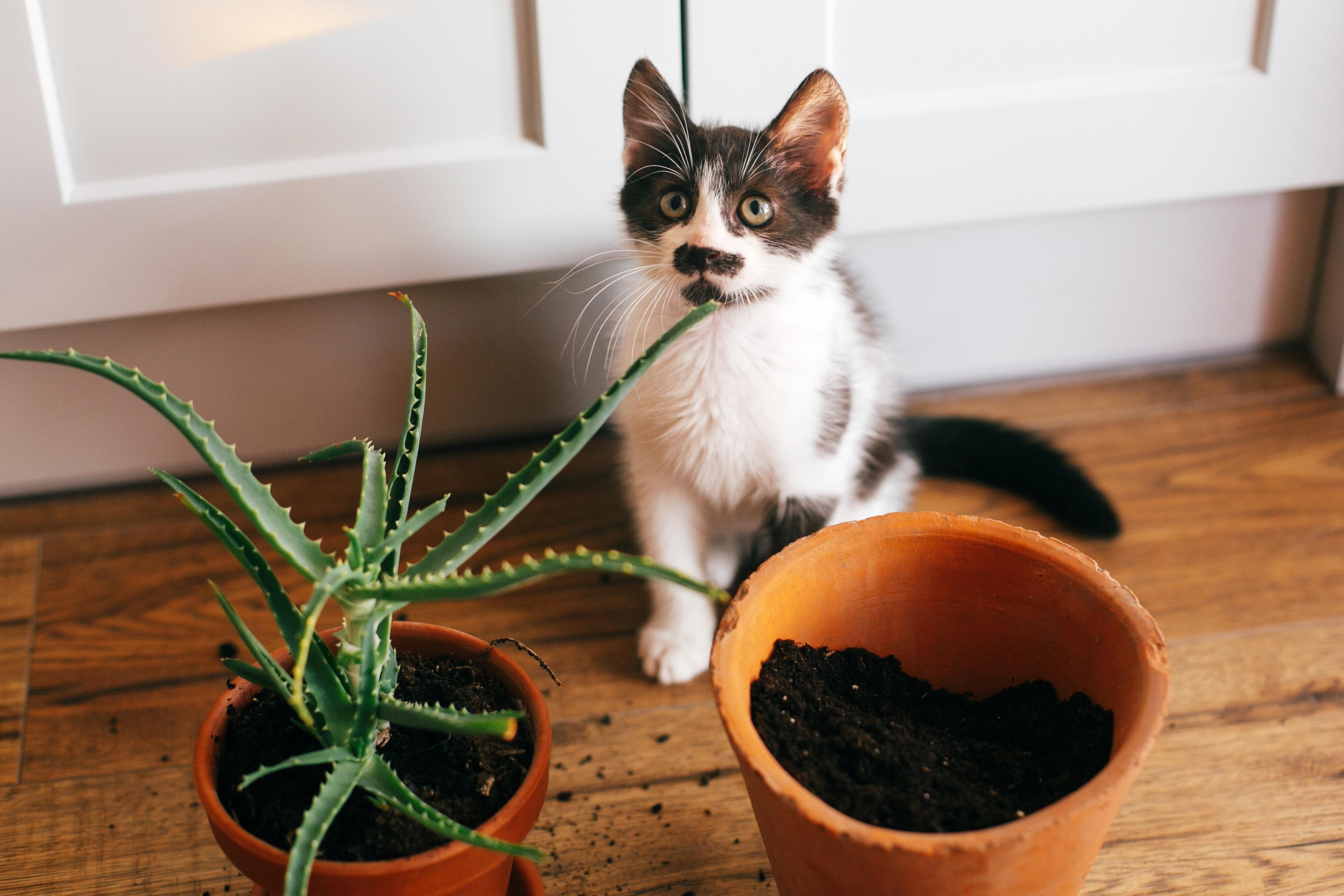 Chien Fait Ses Besoins La Nuit le chat urine dans les plantes : pourquoi et que faire