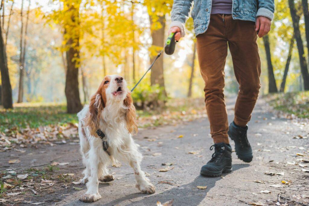 empêcher chien d'aboyer