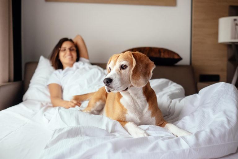 Une femme et son chien dans le lit