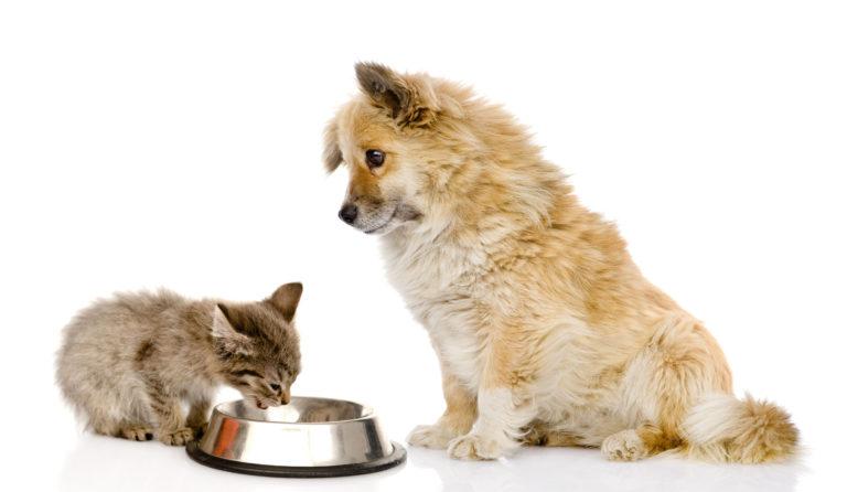 Chaton en train de manger dans sa gamelle en métal, chien assis à côté de lui