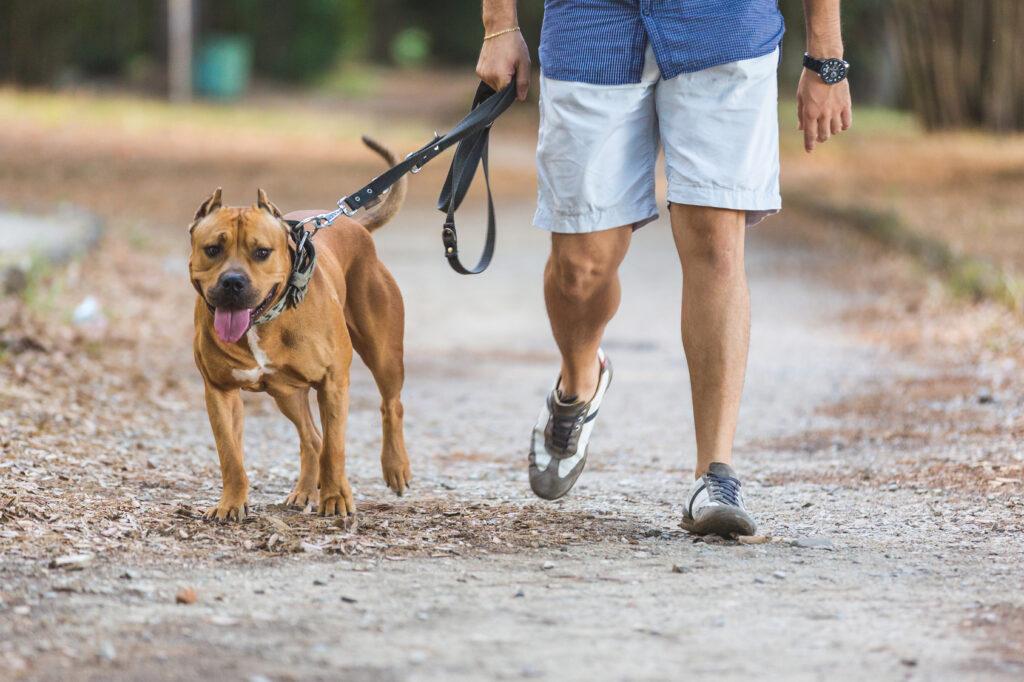 Un chien et son maître se promènent dans un parc.