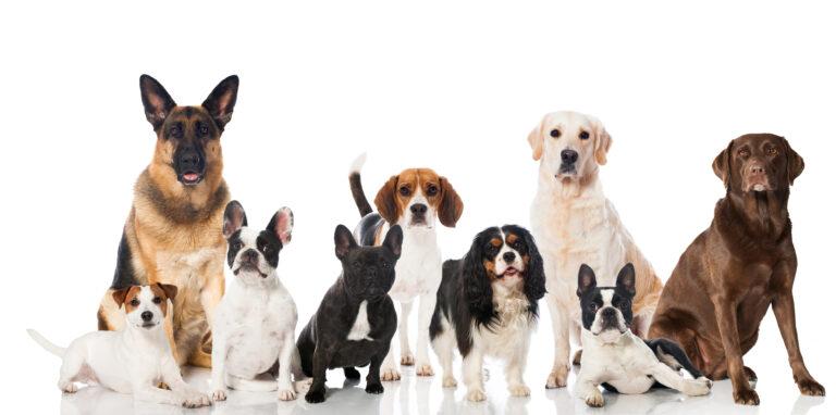 Neuf chiens de races différentes