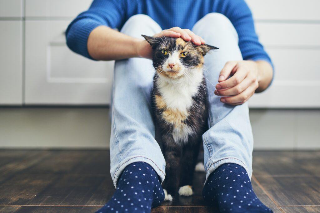 Un jeune homme caresse son chat
