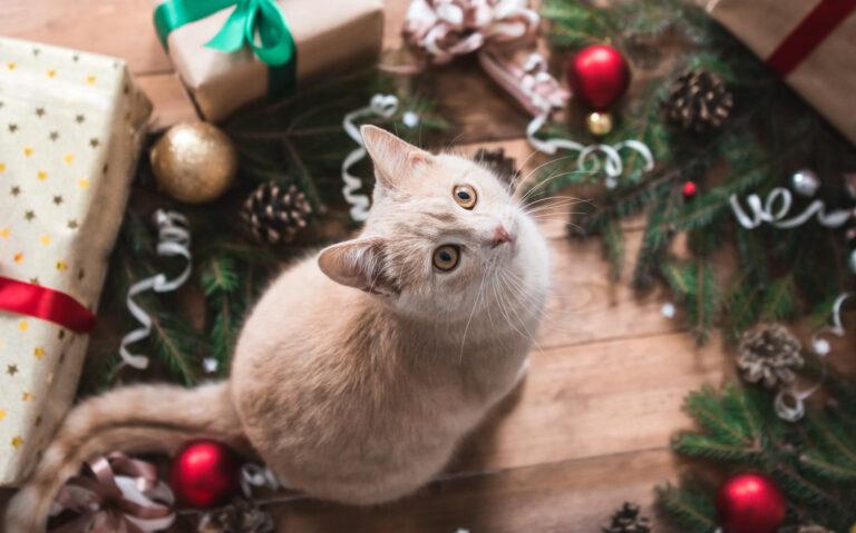 chat roux au milieu des décorations de Noël