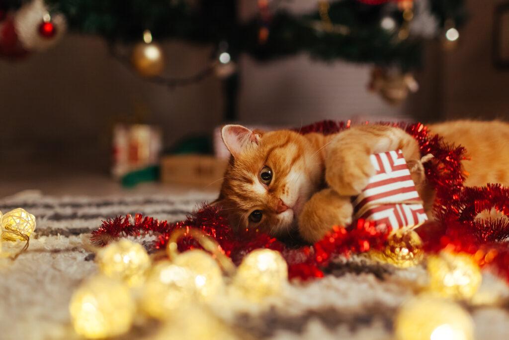 chat roux heureux au milieu de ses cadeaux de Noël