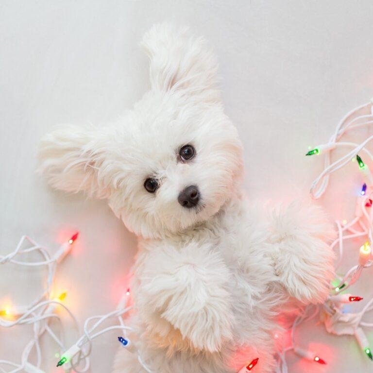 idées cadeaux noel pour chien