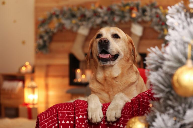 chien mignon sur un fauteuil dans une décoration de Noel