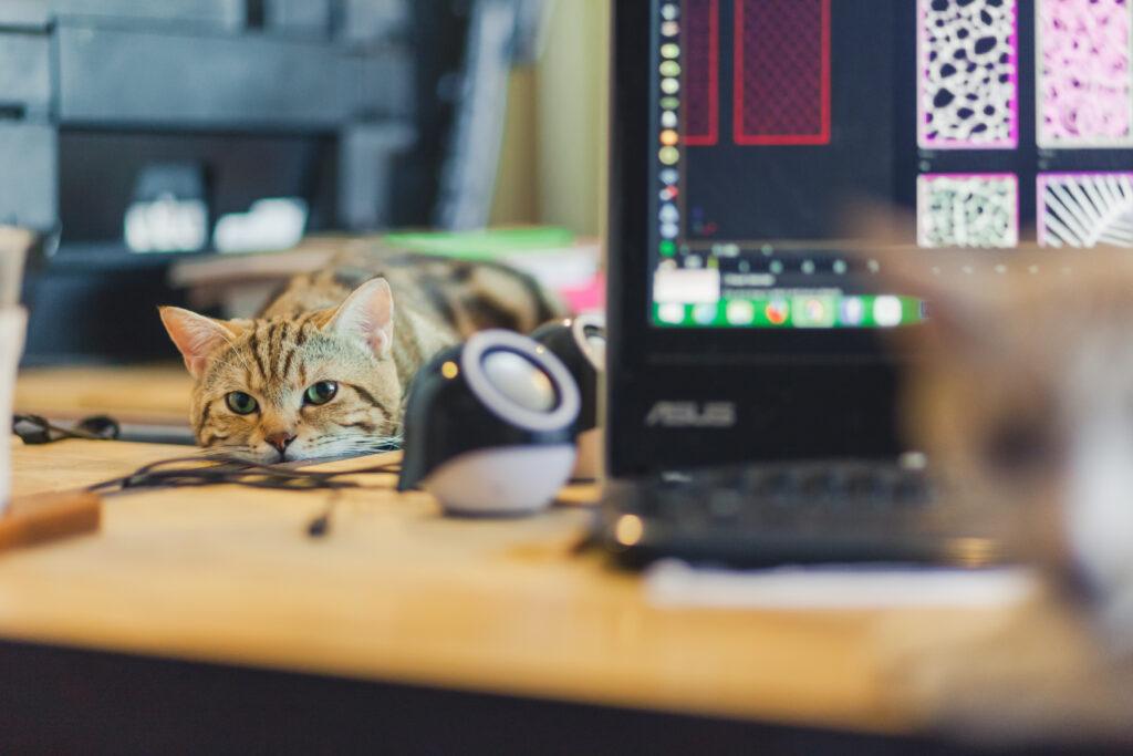 Un chat est allongé paresseusement sur le bureau de son maître