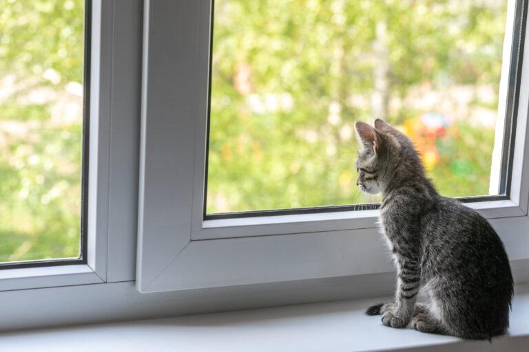 un jeune chat regarde par la fenêtre