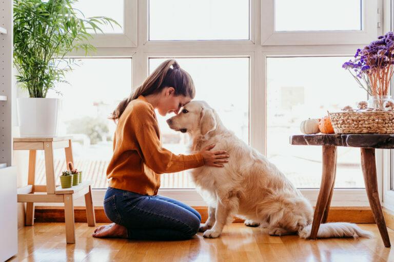Comment promener son chien pendant le confinement ?