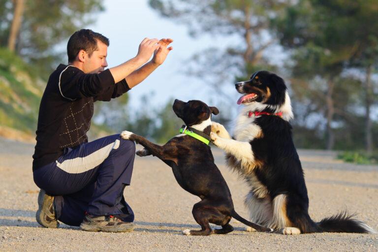 Un homme apprend des tours à ses deux chiens