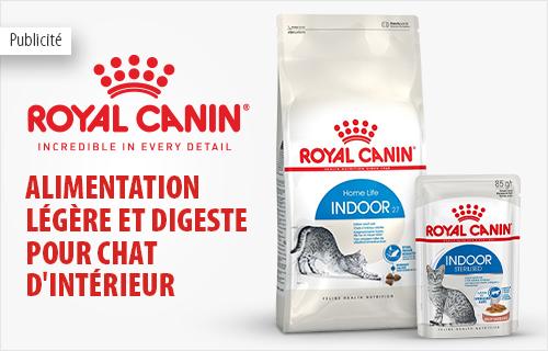 rc_cat_indoor_food