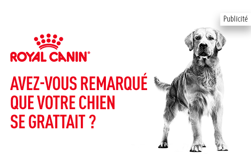rc_chien_care_nutrition