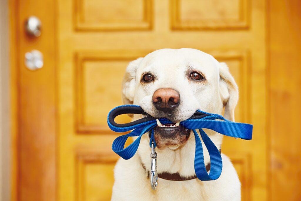 8 conseils pour mieux promener son chien