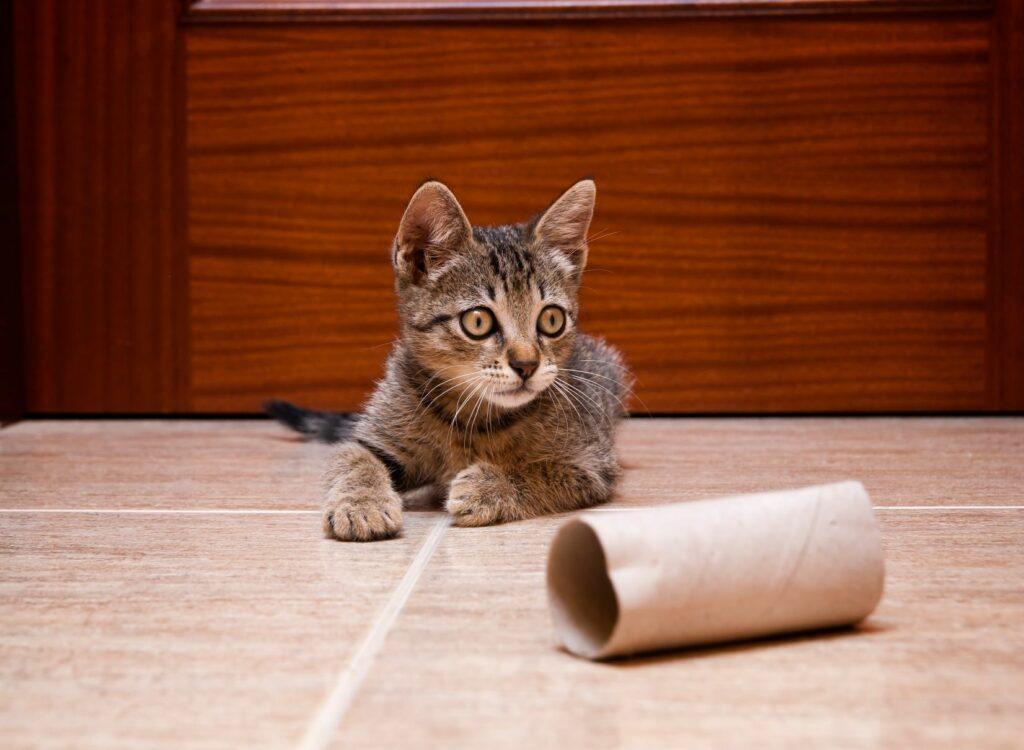 un chat tigré joue avec des jouets pour chat à faire soi-même