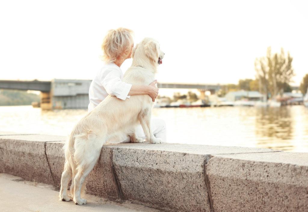 5 bonnes raisons d'adopter un chien âgé