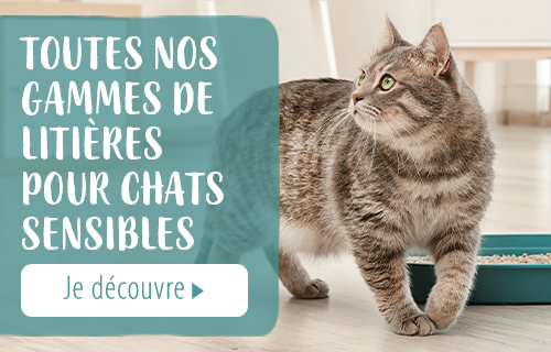 asthme chat
