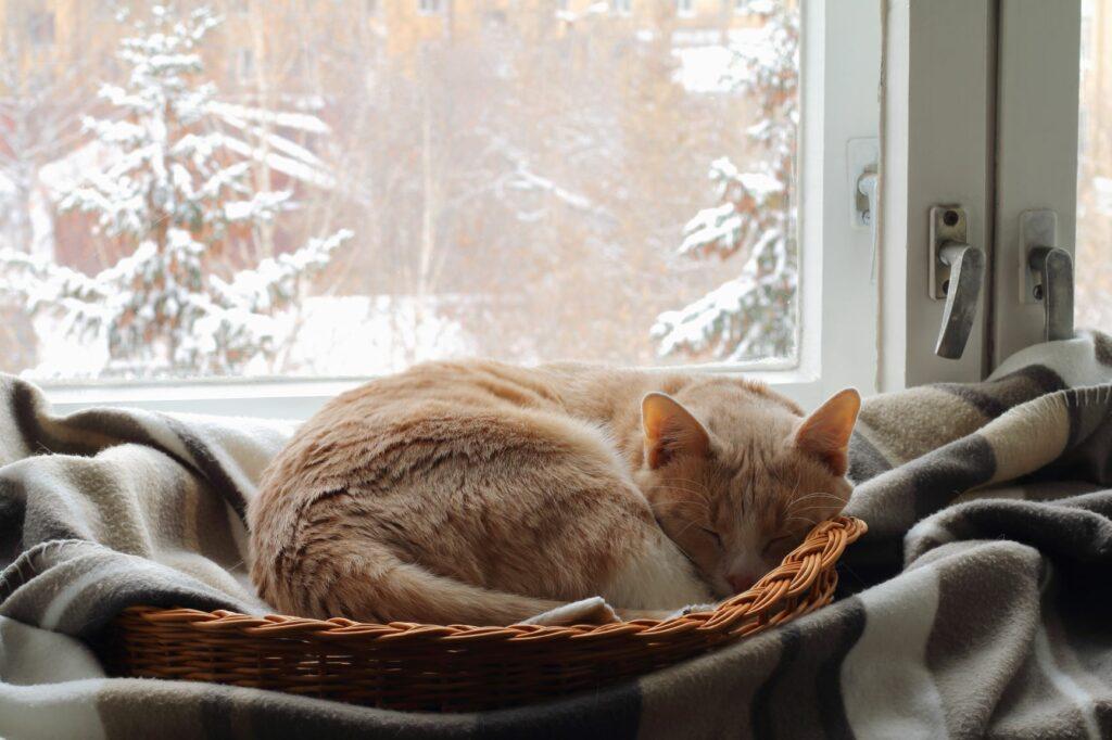 un chat roux fait la sieste sur une couverture en hiver